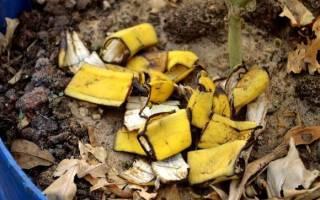 Банановая кожура как удобрение для комнатных растений и огорода