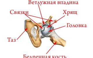 Анатомия и строение тазобедренного сустава – причина болей, заболевания и их лечение