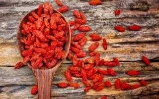 Польза и вред ягод годжи – как правильно принимать