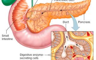 Лечение поджелудочной железы народными средствами и лекарствами дома