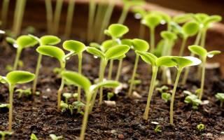 Благоприятные дни для посадки семян и саженцев по лунному календарю