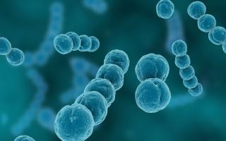Стрептококк вириданс: лечение у человека