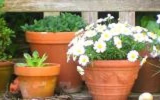 Лунный календарь для комнатных растений на 2018 год