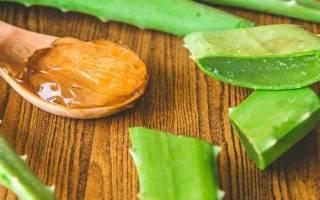 Алоэ с медом: свойства и рецепты