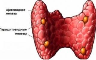 Что такое паратгормон – показания к проведению анализа, показатели нормы в крови, причины и лечение отклонений