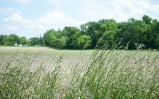 Травяной настой для подкормки растений: как сделать удобрение