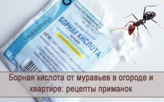 Борная кислота против муравьев в огороде: пропорции для применения