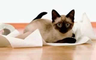 Как отучить кота гадить в неположенном месте, где попало