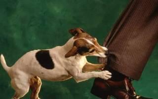 Что делать, если укусила собака, опасен ли укус животного для человека