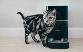 12 лучших автокормушек для кошек