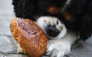 10 человеческих продуктов, которые опасны для вашей собаки
