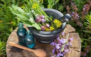 Противогрибковые травы – рецепты народной медицины настоек, мазей и отваров для лечения или профилактики