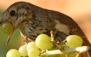 Ультразвуковой отпугиватель птиц