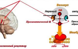 Физиотенз от давления: как принимать