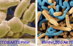 Препараты с бифидобактериями для кишечника