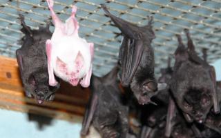 9 способов избавиться от летучих мышей