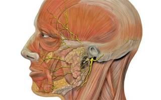 Симптомы и лечение невралгии тройничного лицевого нерва – диагностика и медикаментозные препараты
