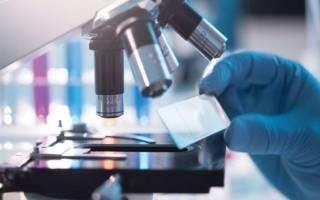 Гистология – что это такое: что показывает анализ ткани
